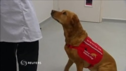 کمک سگ ها برای تشخیص سرطان