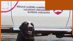 """12-წლიანი მუშაობის შემდეგ მაშველი ძაღლები """"პენსიაზე გავიდნენ"""""""