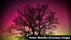 Фотографія північного сяйва поблизу Білорусі Антона Мотолька