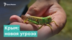Крым. Дефицит воды и новая угроза | Крым за неделю с Александром Янковским
