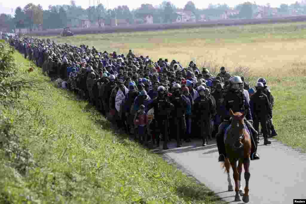 Конная полиция сопровождает группу мигрантов возле селения Добова в Словении, 20 октября 2010 г.