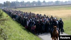 A mounted policeman leads a group of migrants near Dobova, Slovenia, earlier this week.