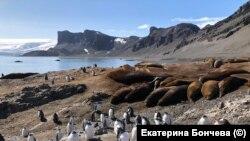 Януари 2020. Тюлени и пингвини в Антарктида