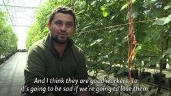 Brexit Uncertainty Weighs On Bulgarian-Staffed British Farm