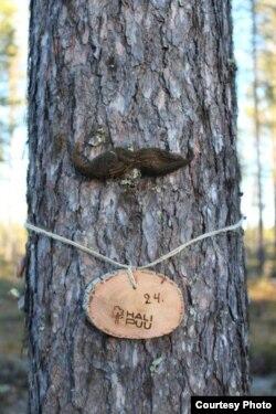 """""""Приемные родители"""" могут баловать свои деревья милыми аксессуарами: бантиками, усами, бусами"""