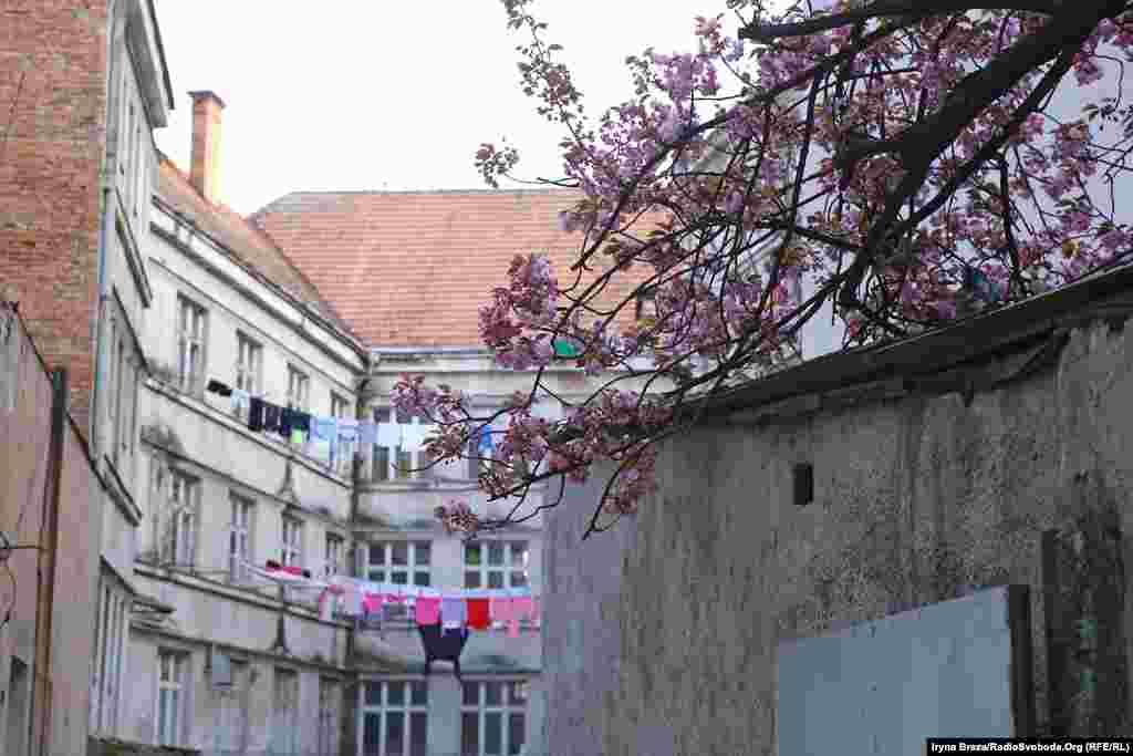 Цього року вперше відбулася онлайн екскурсія по районних центрах Закарпаття, під час якої екскурсоводи стрімили з вулиць, де цвітуть сакури