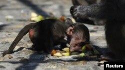 Majmuni foshnje që ishte rrëmbyer në Kopshtin zoologjik në Shkup