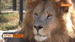 Росіянку покусали леви у Криму | Крим.Реалії