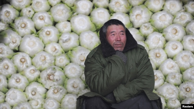A vendor awaits customers in front of cabbages at a wholesale market on the outskirts of Jiaxing, Zhejiang province, in China.