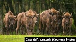 Фота Сяргея Плыткевіча