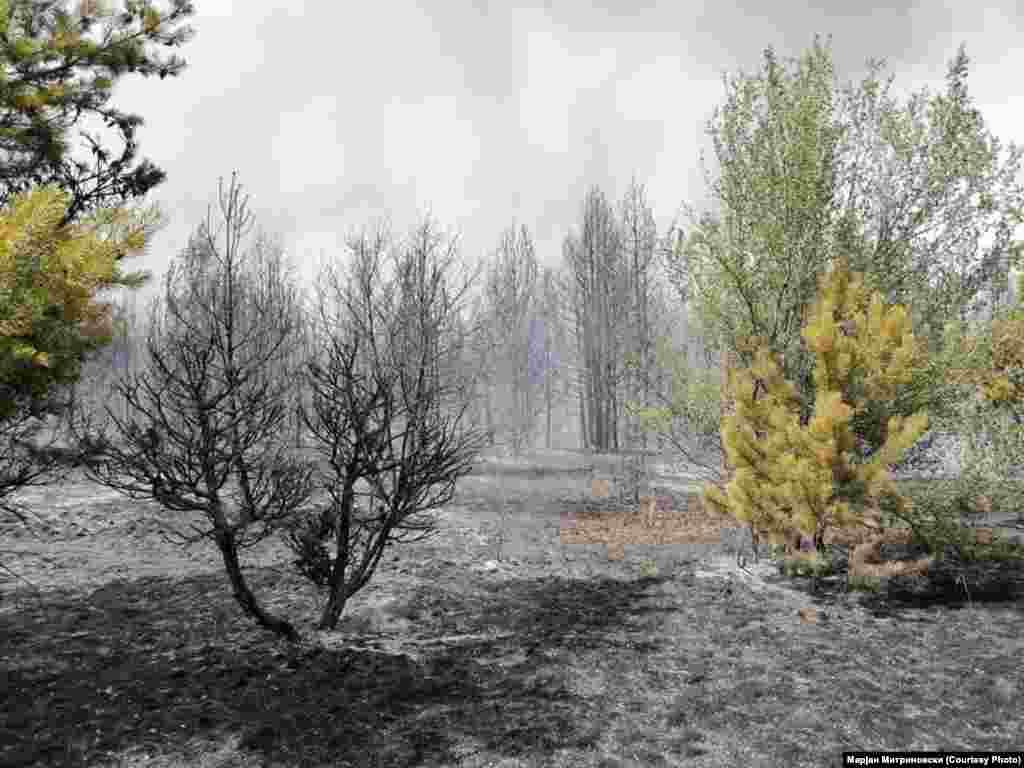 Изгорени дрвја по пожарот во близина на Пехчево.