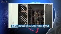 Видеоновости Кавказа 31 октября