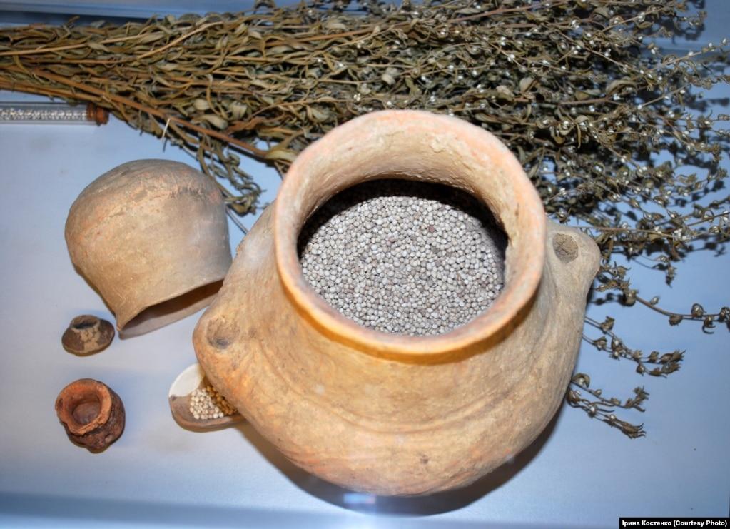 Дивовижний експонат – насіння горобейника польового. Це найстаріше насіння музейного фонду в Європі – йому понад 6 тисяч років