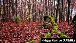 Гай у Баранавічах увосень. Фота Фёдара Коэльо