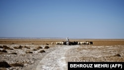FILE: An Iranian shepherd walks his herd in the middle of Hamoon wetland near the Zabol town, in southeastern province of Sistan and Baluchistan bordering Afghanistan.