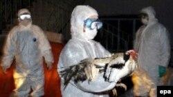 В очагах заражения птичьим гриппом в Турции проходит отбраковка и уничтожение домашней птицы