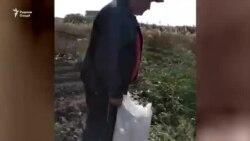 Таджикистанцы возрождают хлопководство в Армении