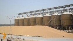 تزايد انتاج محصول الحنطة في بابل