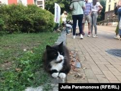 Уличный кот в Зеленоградске