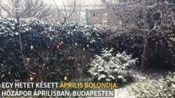 Egy hetet késett április bolondja - hózápor Budapesten