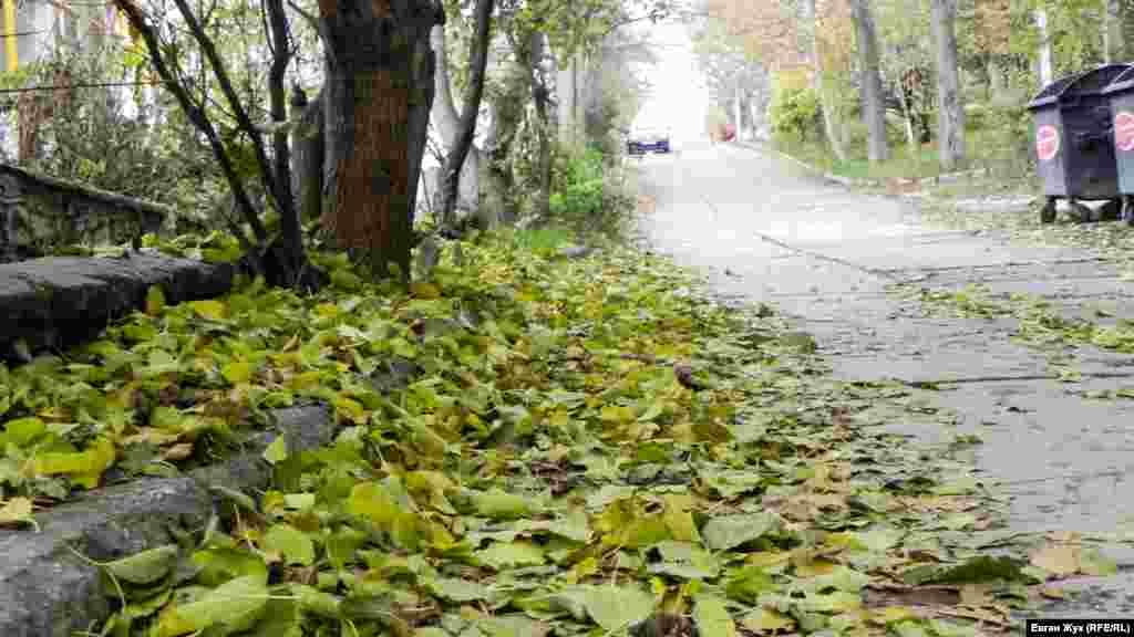 С некоторых деревьев листья опадают зелеными