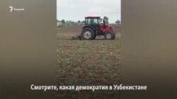 Под Ташкентом хоким приказал уничтожить урожай гороха, чтобы вместо него выращивать хлопок