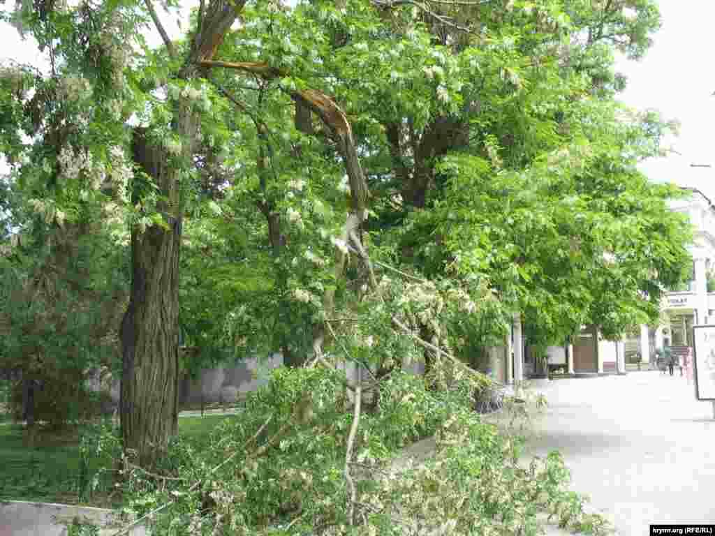 Робота комунальних служб Севастополя. Пошкоджене дерево на зупинці Центральний Ринок.