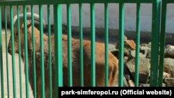 Зооуголок в Симферополе, иллюстрационное фото