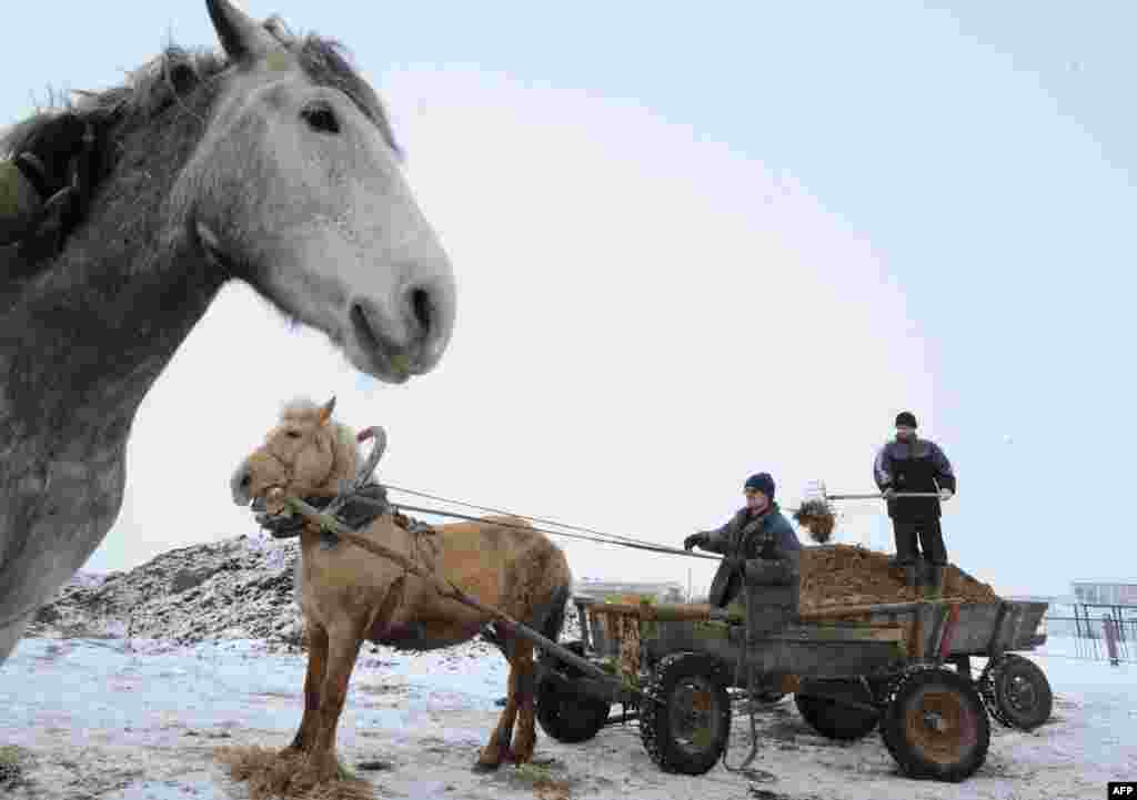 Farmers load a horse-drawn cart in the Belarusian village of Zapesochie. (AFP/Viktor Drachev)