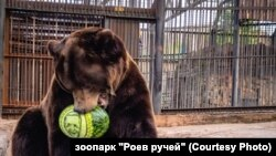 """Медведь из зоопарка """"Роев ручей"""" сделал свой выбор"""
