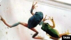 Qurbağalar ətraf mühitdə baş verən dəyişikliklərə çox həssas heyvanlar sayılırlar