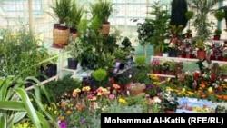 مهرجان الزهور في الموصل