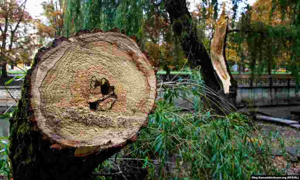 Частину повалених гілок і дерев комунальники обпилили, щоб не заважали перехожим
