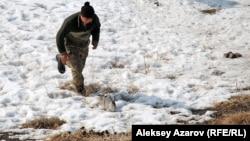 Иногда бегать за зайцем приходилось самому беркутчи. Алматинская область, 23 февраля 2013 года.