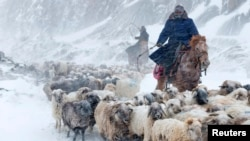 Ethnic Kazakhs herd their sheep amid a heavy snowfall in Yili, Xinjiang Uighur Autonomous Region.