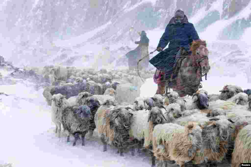 Kazakhs herd their sheep in heavy snowfall in the Xinjiang Uighur Autonomous Region of China, on March 15, 2015. (Reuters/China Daily)