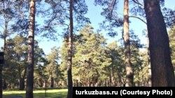 """""""Блокадный"""" парк в Прокопьевске – музей под открытым небом"""