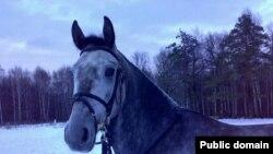Любовь к лошадям заставляет десятки тысяч жителей Литвы ежегодно собираться на берегах Сартая