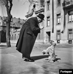 A man tempts his schnauzer in Budapest in 1952.