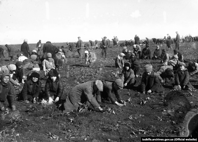 Ілюстрацыйнае фота. Дзеці зьбіраюць мерзлую бульбу на калгасным полі (Украіна, 1933 год)