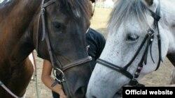 """Konji u centru """"Pegasos"""""""