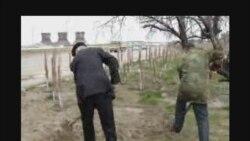Sumqayıt zavodunun işçiləri torpaq belləyir