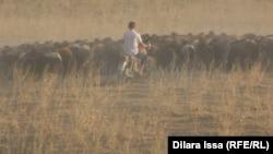 Президент и правительство говорят о помощи сельчанам в будущем времени, но животноводы нуждаются в поддержке уже сегодня. Фото из архива Азаттыка