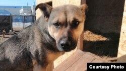 Бездомная собака в «Астана Ветсервис», компании, которой государство платит за «отлов и уничтожение собак».