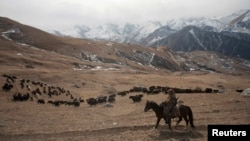 Солтүстік Осетия тауларында мал бағып жүрген адам.