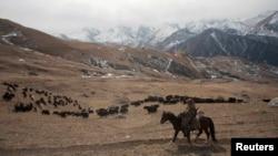 Пастух со стадом яков в горах Северной Осетии.