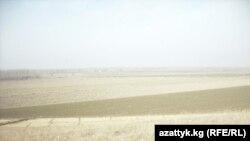 Ашуу айылындагы өзбекстандыктар эгин өстүрүп келаткан 72 гектар жердин бөлүгү.