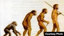 Иллюстрация теории о происхождении человека по Чарльзу Дарвину.