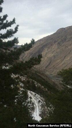 Хвойные леса в горах Северного Кавказа