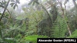 Лес Амазонии